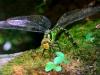 Стрекозы в саду