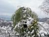 Зима в саду